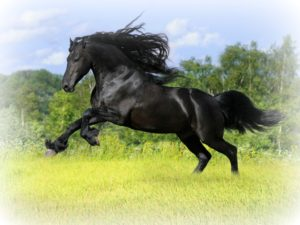 Dark Horse Spirit Animal