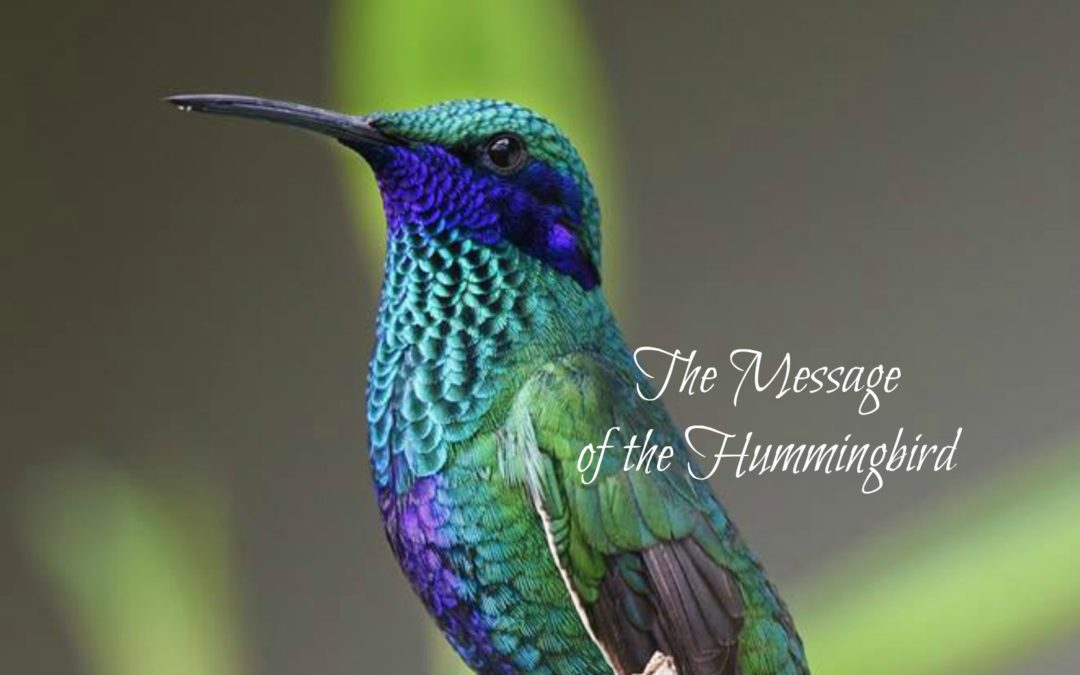 Hummingbird Message