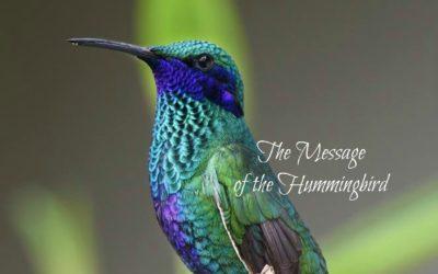 Hummingbird Message